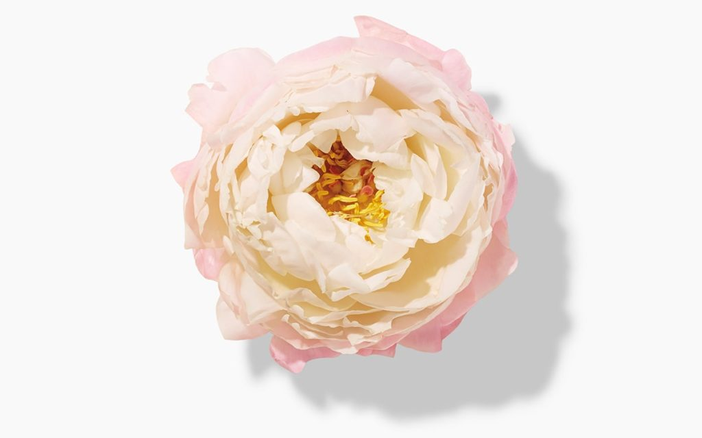 What's Inside: Here's What Peony Can Do for Your Skin