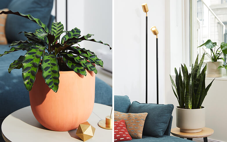 Potted plants as home decor