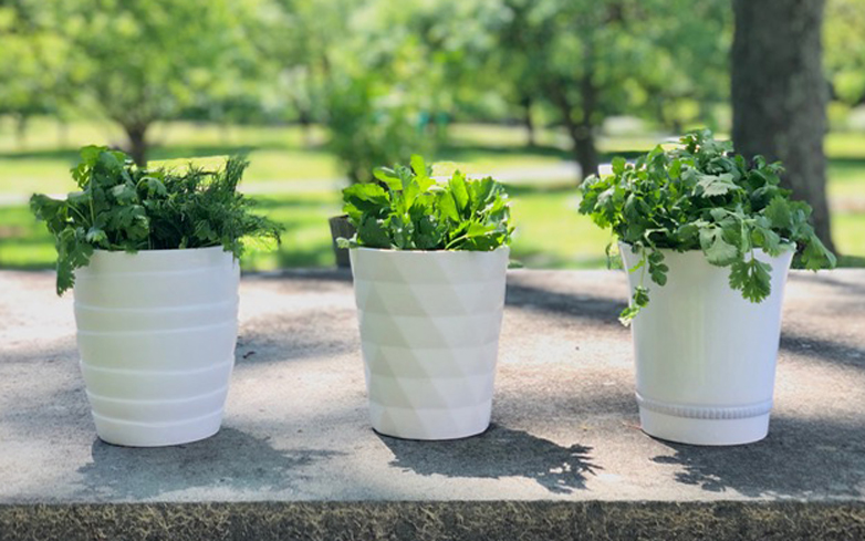Freshen Up: A Chef on How to Store Herbs